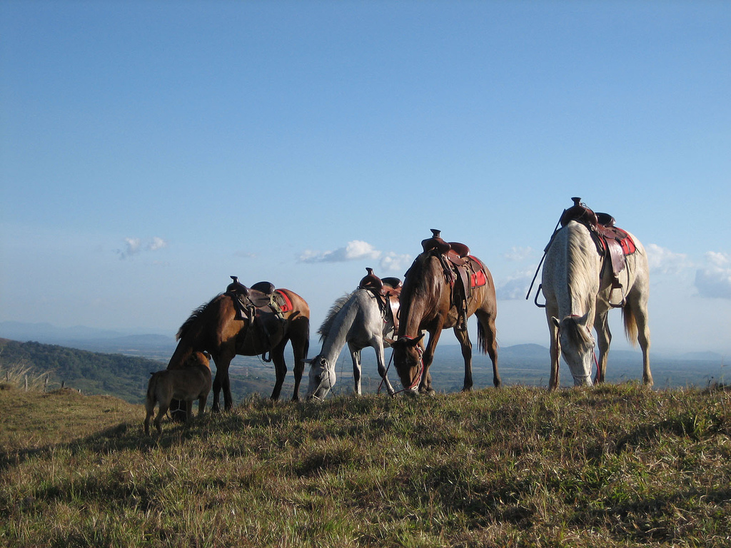 chiriqui horseback riding