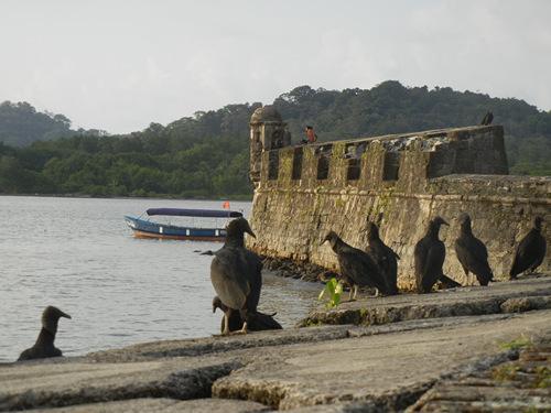 fort vulture