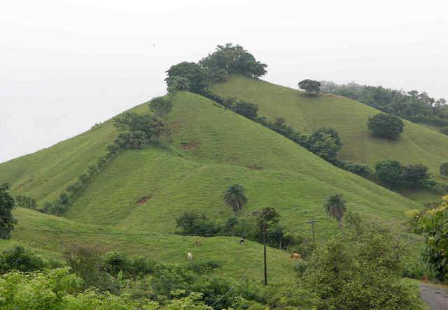 herrera hill