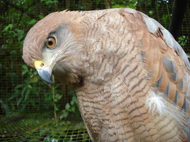 panama-el-valle-day-tour-big-bird