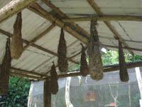 thumb-panama-el-valle-day-tour-zoo-larvas