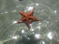 Hermosa estrella de mar