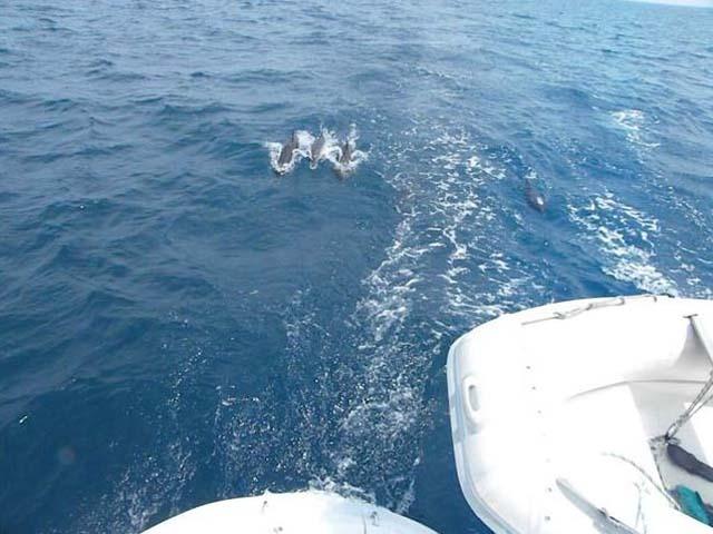 Sailing-Panama-Cartagena-San-Blas-buon-vento-dolphins