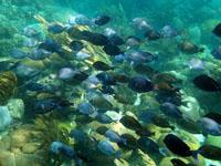 Snorkelling in San Blas