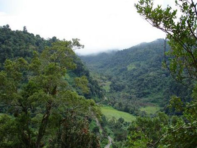 Cloud forest safari & Coffee tour