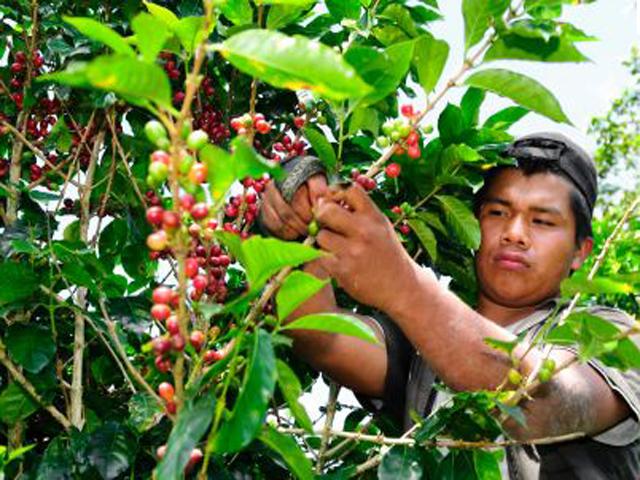 Wildlife Coffee Excursion