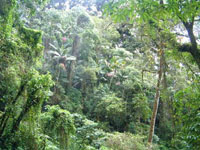 Cloud forest Safari