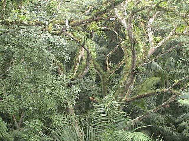 panama-Canal-Jungle-Day-Tour-jungle2