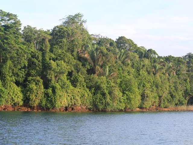 panama-Canal-Jungle-Day-Tour-jungle3