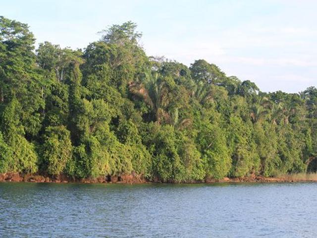panama-Canal-Jungle-Day-Tour-jungle3