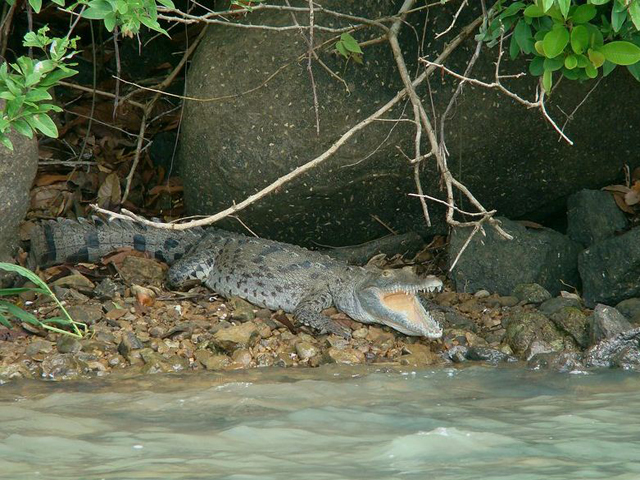 panama-Canal-Jungle-Day-Tour-lagarto