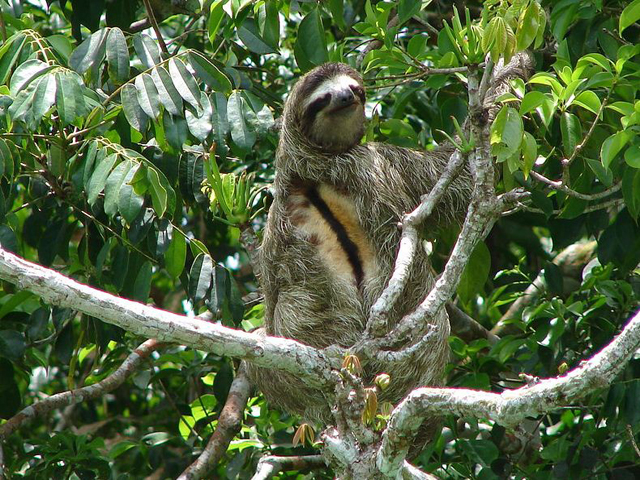 panama-Canal-Jungle-Day-Tour-sloth