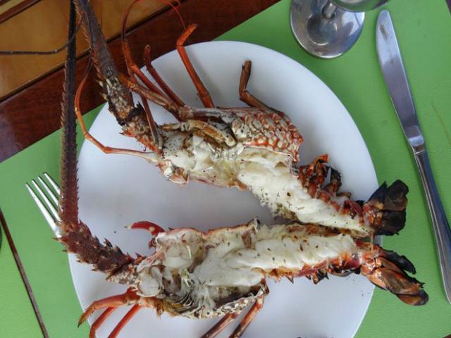Sailing-Panama-Cartagena-San-Blas-lobster2
