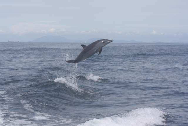 Panama Whale Watching Tour