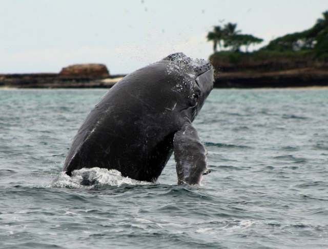 Panama Whale Watching Tour